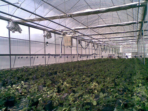 Hydroponic systems图片4